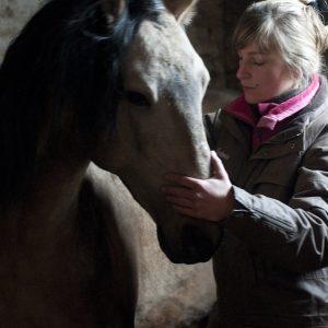 Ostéopathie du cheval - Manipulation du visage