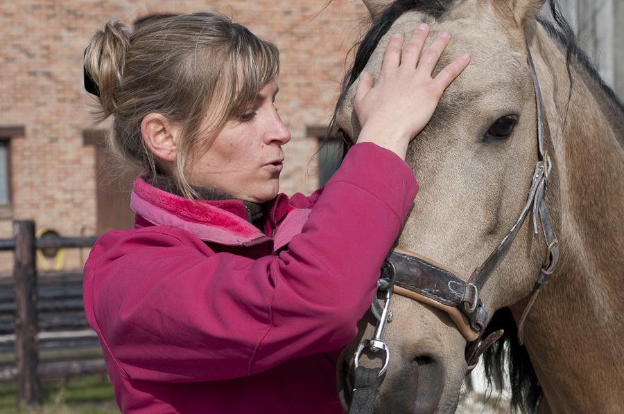 Ostéopathie du cheval - Manipulation du front