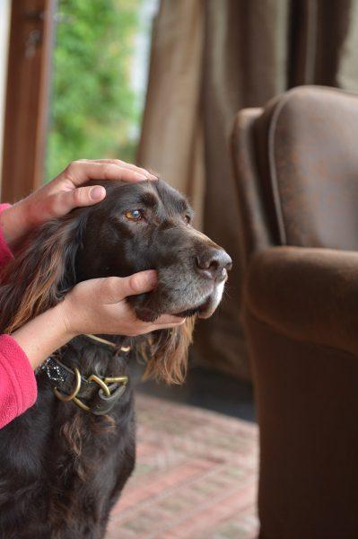 Shiatsu pour chien - Massage facial